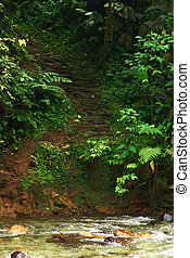 Stairs Leading to Ciudad Perdida