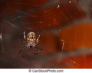 Big spider hanging on a web against brick wall