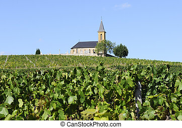 French country and vineyards - vineyards and churchin french...