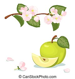 Green apple and flowers. - Green apple and blossoming...