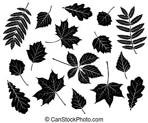 Set of silhouettes of leaves. Maple, oak, mountain ash,...