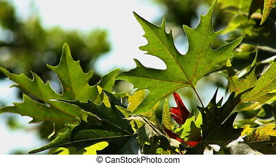 Leaf 1.