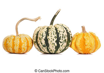 variety of squashes and pumpkins on white background