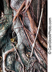oler root wood. - Root wood with leaves in the park with...