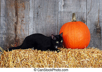 black cat with a pumpkin on a bale of straw