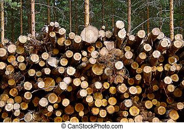 Pine Renewable Energy