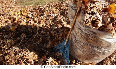 Pan of Autumn Leaves in Bag with Rake