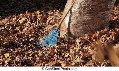 Autumn Leaves Falling with Bag and Rake in Background