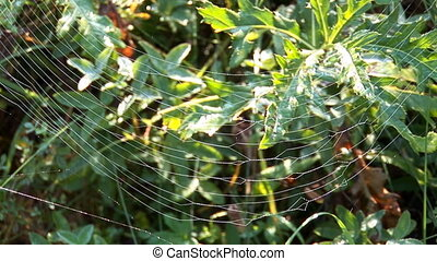 web 7 - web on the grass