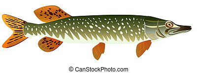 Pike. - Pike fish on a white background, raster...