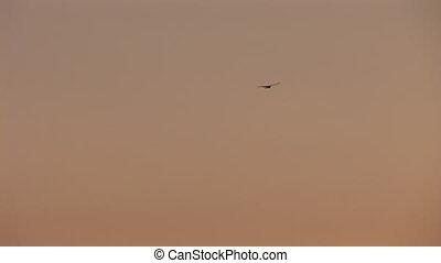 stork 2 - stork flying in the sky