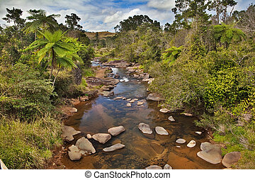 creek and fern trees in Australian rain forest - creek and...