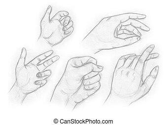 human anatomy - hand