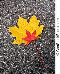 Leaves in fall