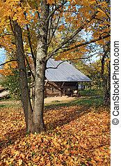 autumn tree near old barn
