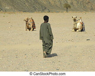 Bedouin children on the way to the camels
