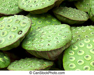 close up of lotus seed pods