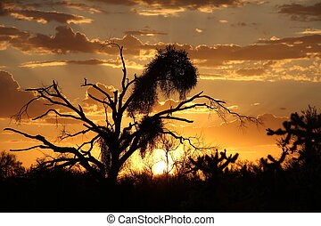 Mesquite Sunset - Mesquite tree somersetted by an Arizona...