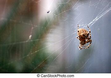 Cat Face Spider