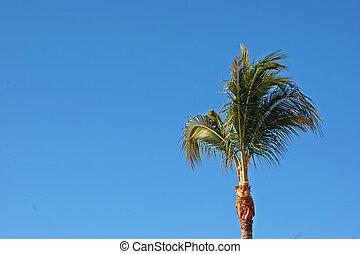 Palm Tree  - Single Palm Tree Against Deep Blue Sky