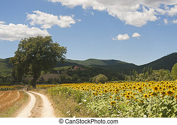 Landscape between Lazio and Umbria (Italy) at summer with...