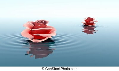 Rose floating on water