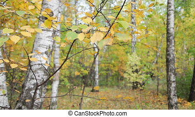 Autumnal forest - Moscow, Russia