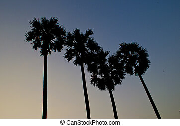 coconut trees and blue clear sky with sunset