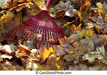 rake and autumn leaves