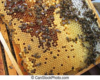 bees and their mother - bees and mother of bees with number...