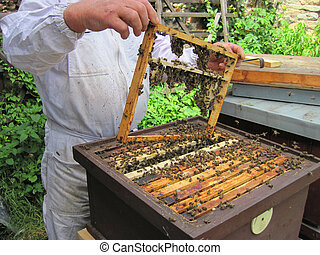 beekeeping in the small czech farm in the summer