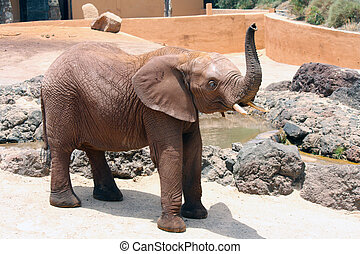 Elephant - A big and lone elephant in a sunny day