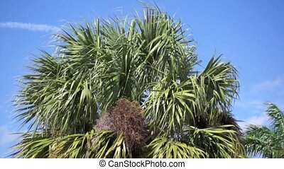 Panning across Palm Trees in the Br