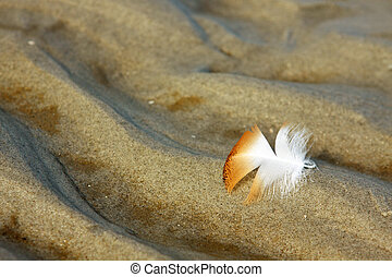 orange feather on sand - white and orange feather on the...