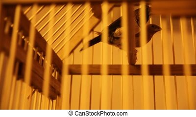 Goldfinches in the cell