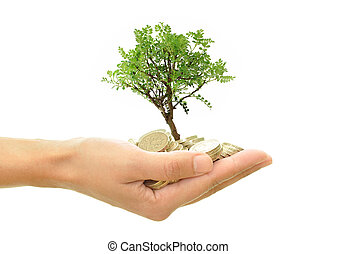 Tree growing from money - Hand holding a small bonsai tree