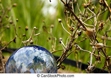 Mantis Ball - Praying mantis standing on blue watering globe