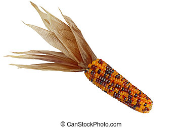 Indian Corn - Dried Indian Corn isolated on white background