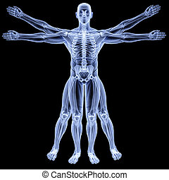 vitruvian man under X-rays isolated on black
