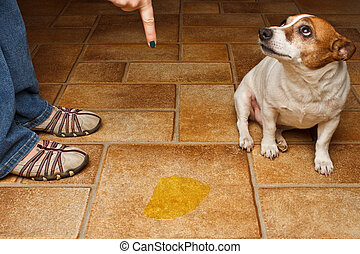 Dog Pee Scold Front Sad - Old dog being scolded beside it's...