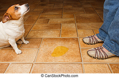 Dog Pee Spot - Dog and owner meet at a urine puddle