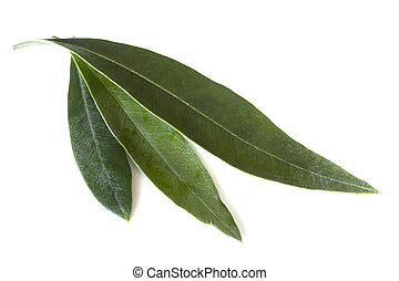 Olive Leaves - Fresh olive leaves, isolated on white...
