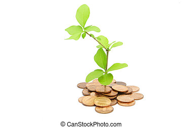 plant and money - the plant growing through and 1 cent coins