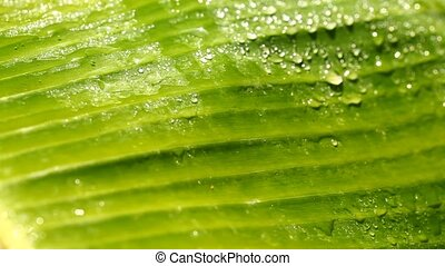 Water drops on leaf surface