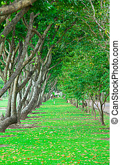 wayside trees - Beautiful green grass wayside trees