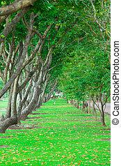 wayside trees - Beautiful green grass wayside trees