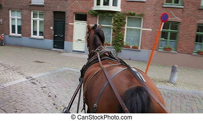 Carriage horse ride around the street