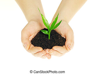 plant in hands isolated on white background