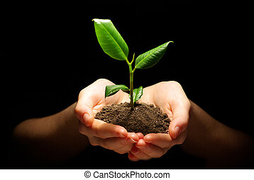 plant in hands - Hands holding plant in soil on black