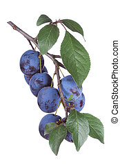 plums with leafs on a white background